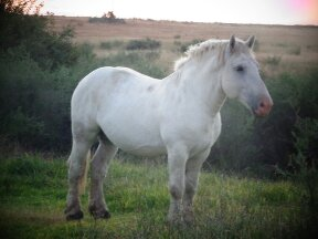 Gemini Maurice - Beautiful Stallion, loving temperament